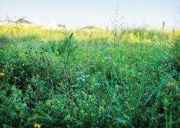 Norton Commons Wildflower Meadow